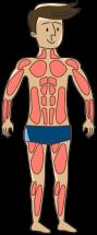 Muskeln-aufbauen